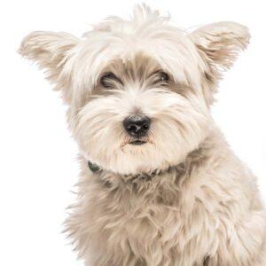 Gina Brandschutz Bürohund